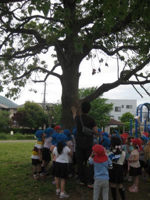 公園の真ん中には、大きい木が立っていました。