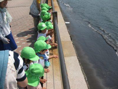 海を眺めるいちご組