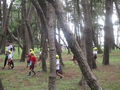 千本松原の中をお散歩する年中組