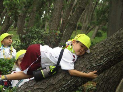 木登りもしちゃいました。
