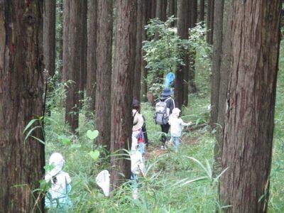 木のチップを敷いた杉林の中を歩きながら、自然の声に耳を傾けました。
